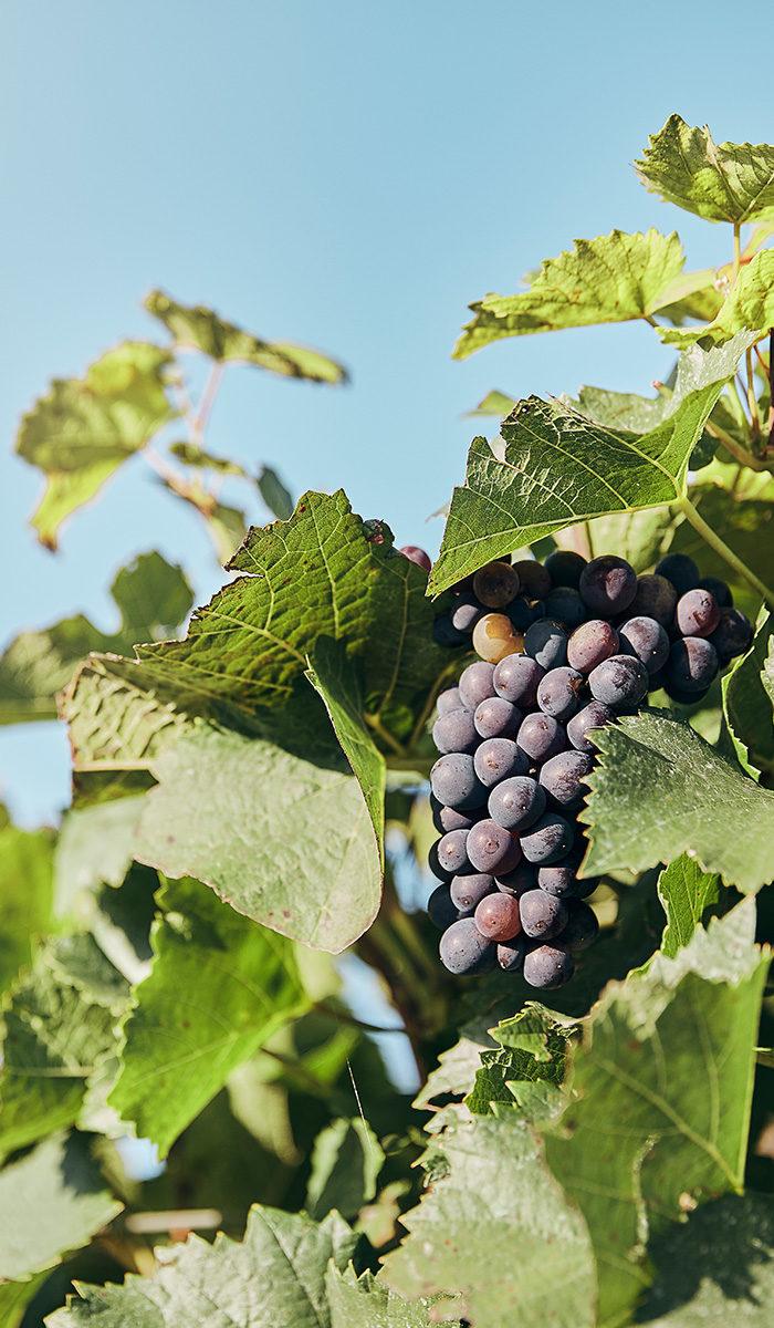 Weingut Hensel